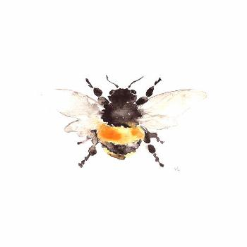 A Haiku times 2 Secrets Why are they hidden A lot can be a burden Be one to release The Bumblebee S