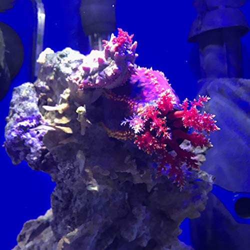 Seachem Prime Fresh and Saltwater Conditioner - Chemical
